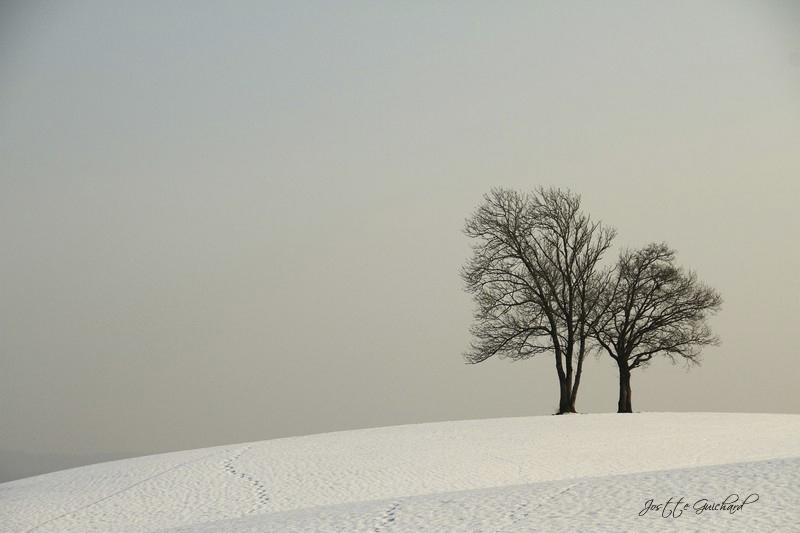 les-arbres2.jpg